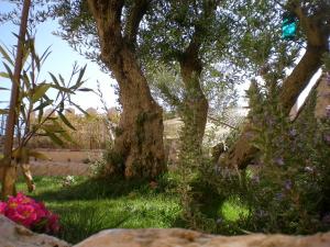 jardin 300x225 - jardin