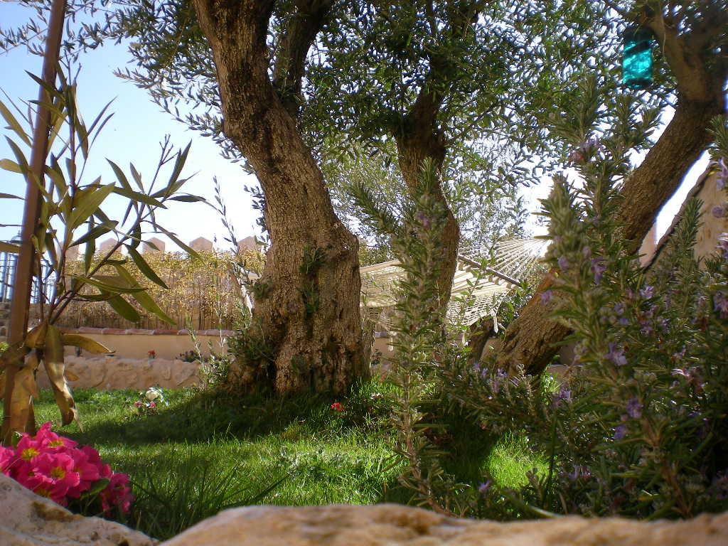 jardin - Casa rural con chimenea